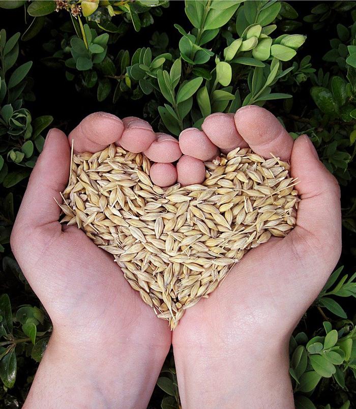 Зърносъхранение